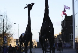 Giraffe sculptures